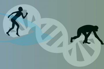אבולוציה של הריצה למרחקים ארוכים